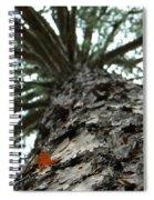 Up Pine Spiral Notebook