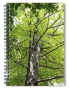 Up The Oak Tree Spiral Notebook