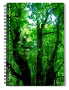 Up Through The Trees Spiral Notebook