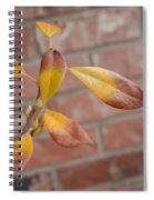 Urban Camouflage Spiral Notebook