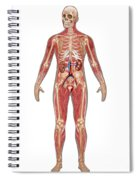 Urinary, Skeletal & Muscular Systems Spiral Notebook