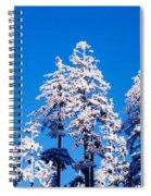 Usa, Oregon, Pine Trees, Winter Spiral Notebook