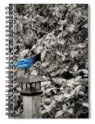 Vagabon Blue Bird Spiral Notebook