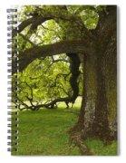Valley Oak Spiral Notebook