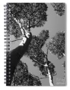 Valley Of The Giant Tingles Bw Spiral Notebook