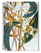 Vanilla Pods Spiral Notebook