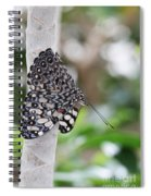Variable Cracker Butterfly Spiral Notebook