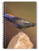 Varied Bunting Spiral Notebook