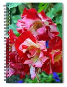 Variegated Multicolored English Roses Spiral Notebook