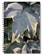 Varigated Ivy Leaves Spiral Notebook