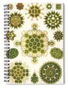 Varities Of Pediastrum From Kunstformen Der Natur Spiral Notebook