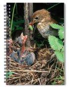 Veery At Nest Spiral Notebook