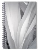Veil Spiral Notebook