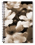 Verbena Named White Hail Spiral Notebook