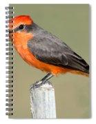Vermilion Flycatcher Pyrocephalus Spiral Notebook