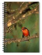 Vermillion Flycatcher Spiral Notebook
