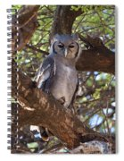 Verreauxs Eagle Owl In Tree Spiral Notebook