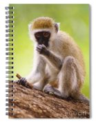 Vervet Monkey Spiral Notebook