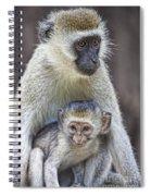 Vervet Monkeys Spiral Notebook