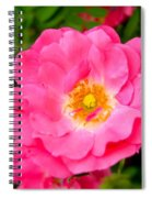 Very Pink Rose Spiral Notebook
