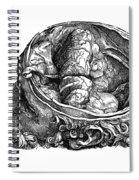 Vesalius: Olfactory Organs Spiral Notebook