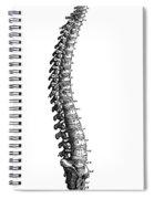 Vesalius: Spine, 1543 Spiral Notebook