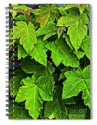 Vibrant Young Maples - Acer Spiral Notebook