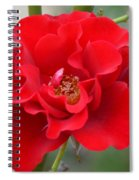 Vibrantly Red Rose Spiral Notebook