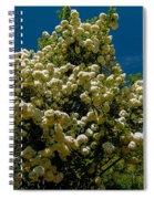 Viburnum Opulus Compactum Bush With White Flowers Spiral Notebook