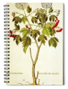Viburnum Opulus Spiral Notebook