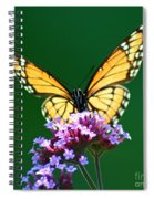 Viceroy Butterfly Square Spiral Notebook