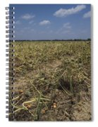Vidalia Georgia Onion Fields Spiral Notebook