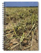 Vidalia Onion Seed Field - Georgia Spiral Notebook