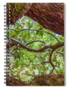 View Through Angel Oak Tree Spiral Notebook