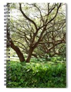 Vines And Oaks Spiral Notebook