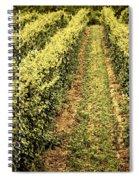 Vines Growing In Vineyard Spiral Notebook