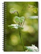 Vineyard Vine Spiral Notebook