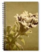 Vintage Double Petunia Spiral Notebook