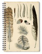 Vintage Feather Study-a Spiral Notebook