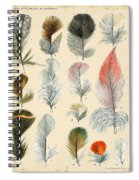 Vintage Feather Study-b Spiral Notebook