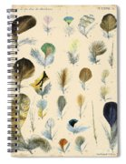 Vintage Feather Study-c Spiral Notebook