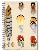 Vintage Feather Study-d Spiral Notebook