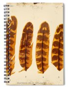 Vintage Feather Study-g Spiral Notebook