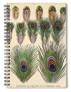 Vintage Feather Study-jp2084 Spiral Notebook
