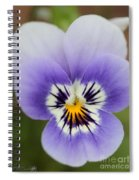 Viola Named Sorbet Marina Baby Face Spiral Notebook
