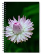 Violet And White Flower Sepals And Bud Spiral Notebook