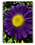 Violet Aster Spiral Notebook