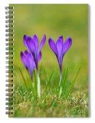 Trio Of Violet Crocuses Spiral Notebook