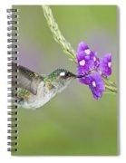 Violet-headed Hummingbird Spiral Notebook