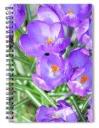 Violet Lilies Spiral Notebook
